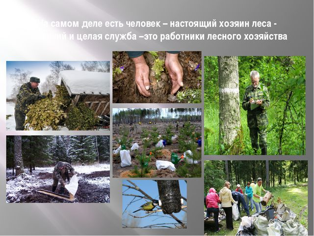 На самом деле есть человек – настоящий хозяин леса - лесничий и целая служба...