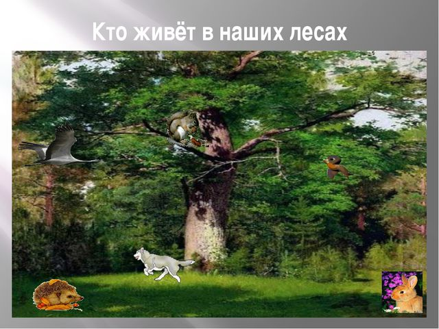 Кто живёт в наших лесах