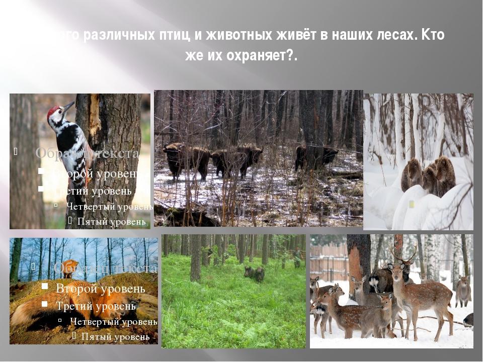 Много различных птиц и животных живёт в наших лесах. Кто же их охраняет?.
