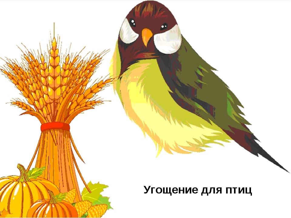 Угощение для птиц