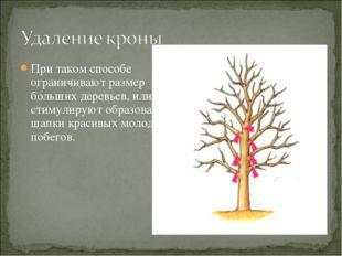 При таком способе ограничивают размер больших деревьев, или стимулируют образ