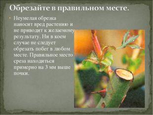 Неумелая обрезка наносит вред растению и не приводит к желаемому результату.