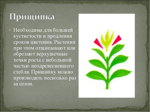 Необходима для большей кустистости и продления сроков цветения. Растения при...