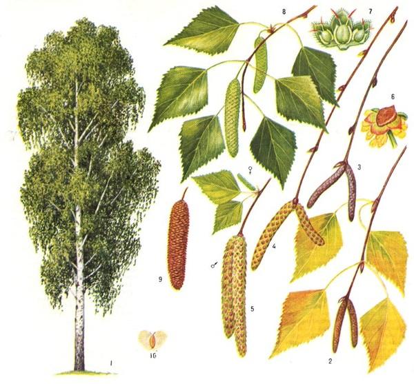 Лекарственные растения Лечебные свойства,фитотерапевтические рецепты. . - Part 3