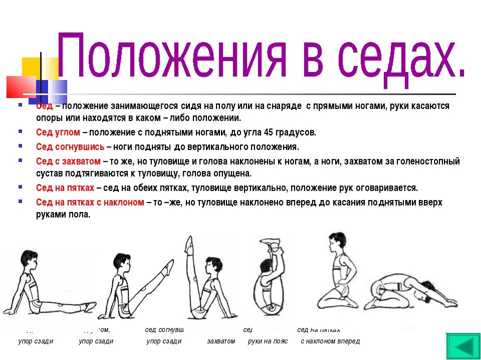 Сед – положение занимающегося сидя на полу или на снаряде с прямыми ногами, р...