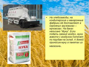 На хлебозаводы, на кондитерские и макаронные фабрики её доставляют в огромных