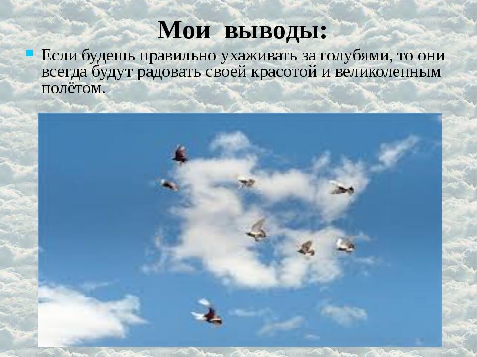 Мои выводы: Если будешь правильно ухаживать за голубями, то они всегда будут...