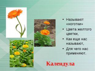 Называют «ноготки» Цвета желтого цветки, Как еще нас называют, Для чего нас п