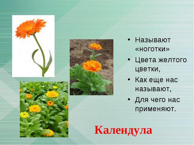 Называют «ноготки» Цвета желтого цветки, Как еще нас называют, Для чего нас п...