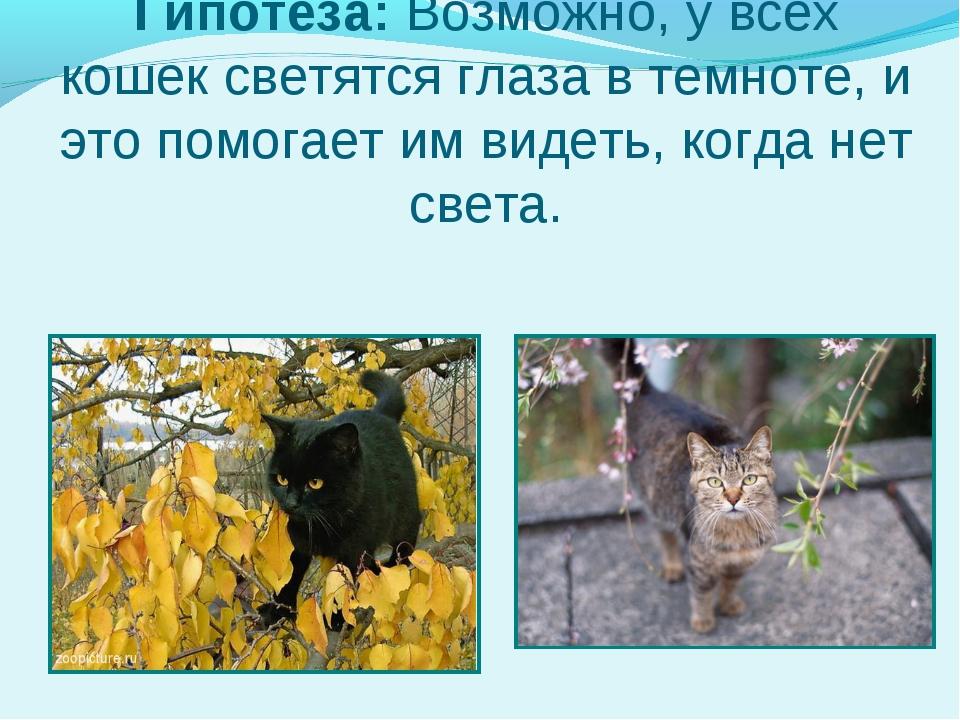 Гипотеза: Возможно, у всех кошек светятся глаза в темноте, и это помогает им...
