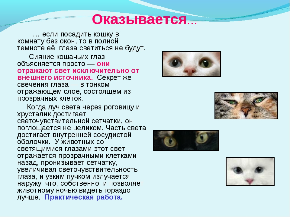 не вижу как светятся глаза у кошки