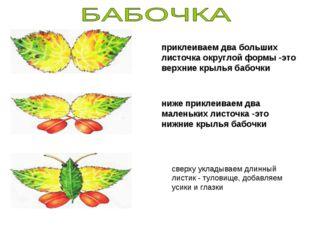 приклеиваем два больших листочка округлой формы -это верхние крылья бабочки н