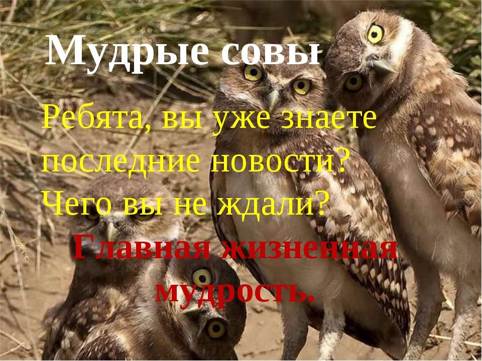 Мудрые совы Мудрые совы Ребята, вы уже знаете последние новости? Чего вы не ж...