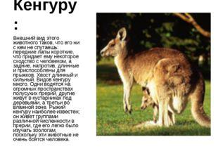 Кенгуру: Внешний вид этого животного таков, что его ни с кем не спутаешь: пер
