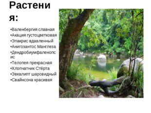 Растения: Валенбергия славная Акация густоцветковая Эпакрис вдавленный Анигоз