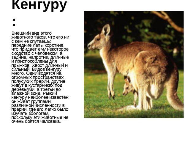 Кенгуру: Внешний вид этого животного таков, что его ни с кем не спутаешь: пер...