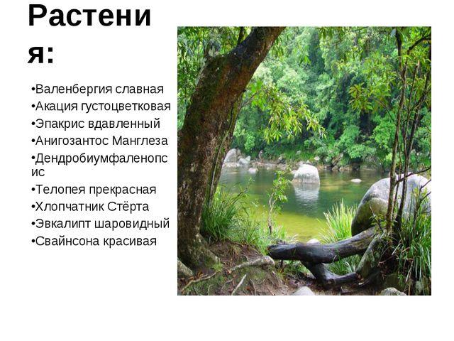 Растения: Валенбергия славная Акация густоцветковая Эпакрис вдавленный Анигоз...