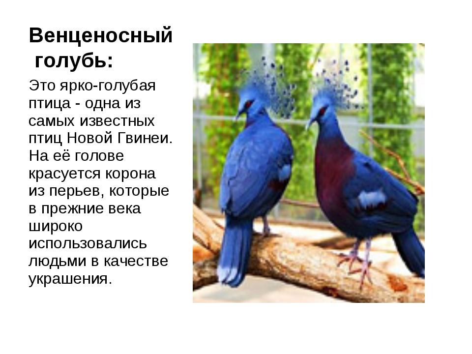 Венценосный голубь: Это ярко-голубая птица - одна из самых известных птиц Нов...