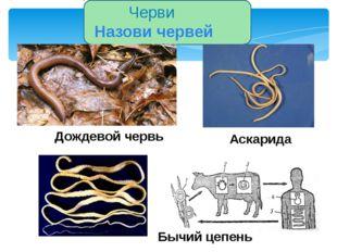 Моллюски Назови моллюсков Устрица Мидия Беззубка Улитка Слизень Осьминог Кал