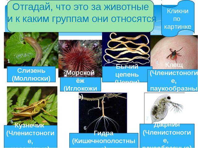 1.Сегодня я понял, что животные, у которых нет осевого позвоночника, называют...