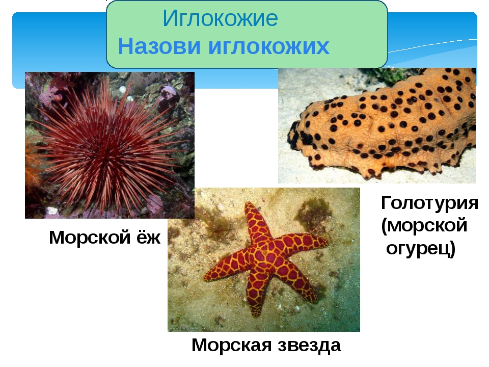 Группа беспозвоночных Характеристика Представители Кишечнополостные Водные о...