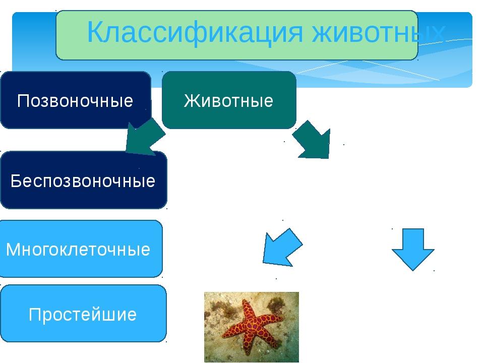 Классификация животных Животные Простейшие Многоклеточные Беспозвоночные Поз...