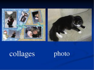collages photo