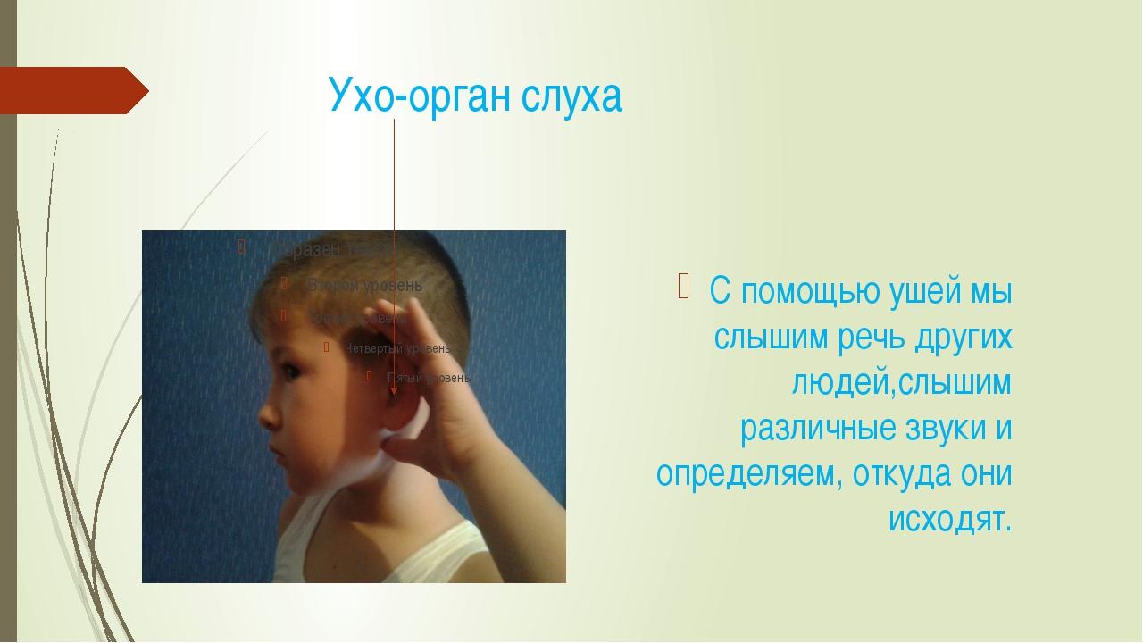Ухо-орган слуха С помощью ушей мы слышим речь других людей,слышим различные...