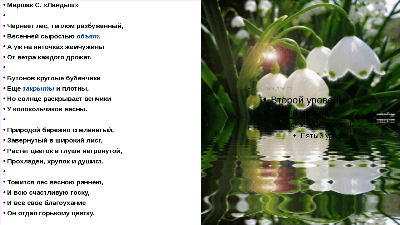 Маршак С. «Ландыш»  Чернеет лес, теплом разбуженный, Весенней сыростью объя...