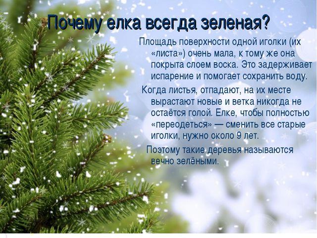 Почему елка всегда зеленая? Площадь поверхности одной иголки (их «листа») оче...
