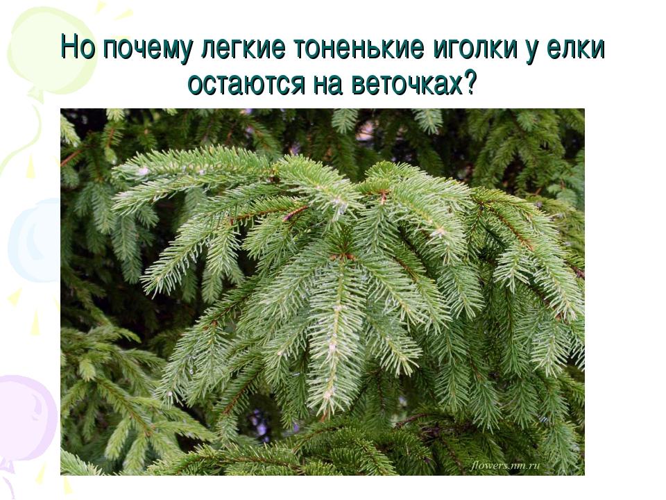 Но почему легкие тоненькие иголки у елки остаются на веточках?