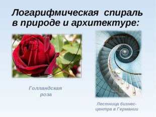 Логарифмическая спираль в природе и архитектуре: Голландская роза Лестница би
