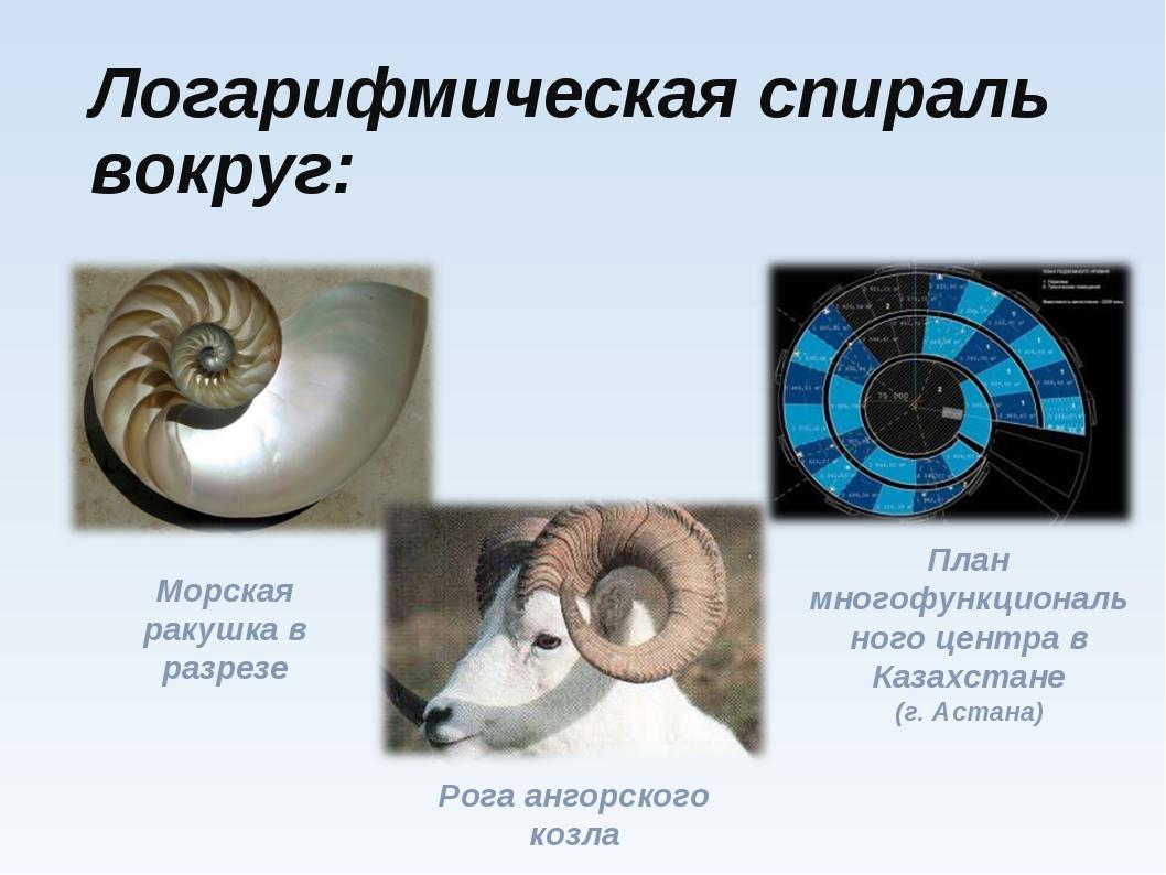 Логарифмическая спираль вокруг: Морская ракушка в разрезе Рога ангорского коз...