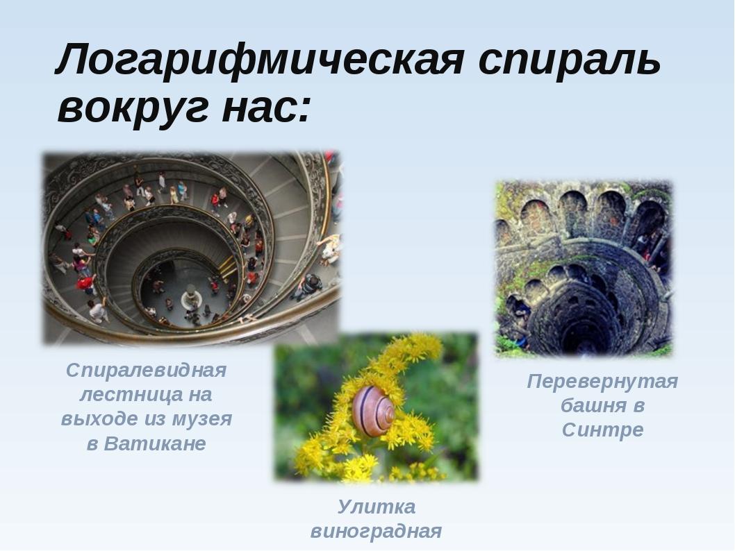 Логарифмическая спираль вокруг нас: Улитка виноградная Спиралевидная лестница...