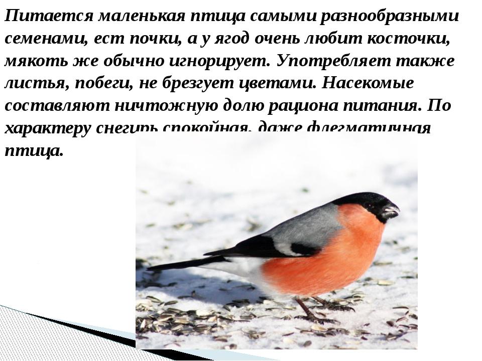 Питается маленькая птица самыми разнообразными семенами, ест почки, а у ягод...