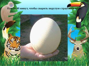 Нужно 40 минут, чтобы сварить вкрутую страусиное яйцо.