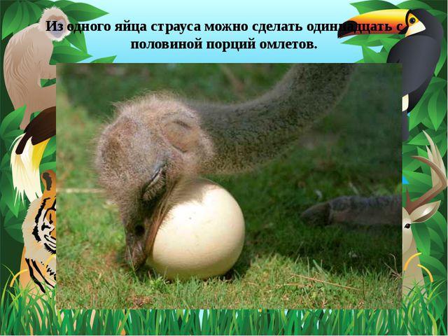 Из одного яйца страуса можно сделать одиннадцать с половиной порций омлетов.
