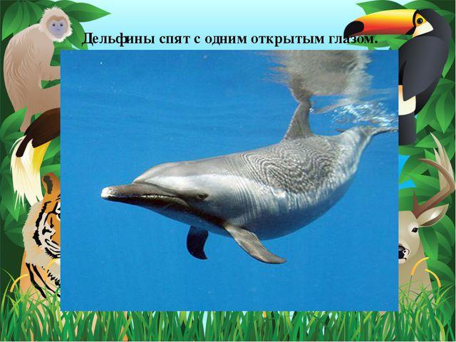Дельфины спят с одним открытым глазом.