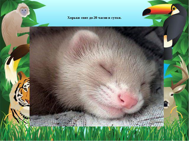 Хорьки спят до 20 часов в сутки.