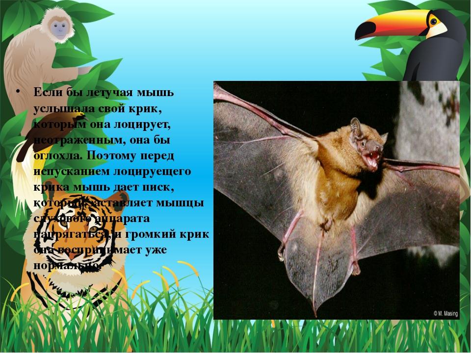 Если бы летучая мышь услышала свой крик, которым она лоцирует, неотраженным,...