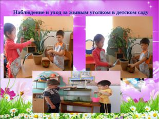 Наблюдение и уход за жывым уголком в детском саду