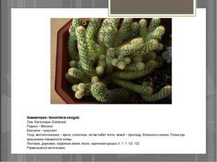 Маммилярия/ Mammillaria elongata Сем. Кактусовые (Cactacae) Родина – Мексик