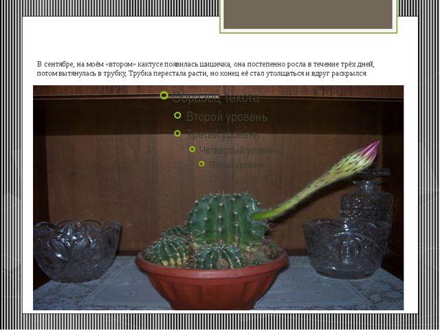 В сентябре, на моём «втором» кактусе появилась шишечка, она постепенно росла...