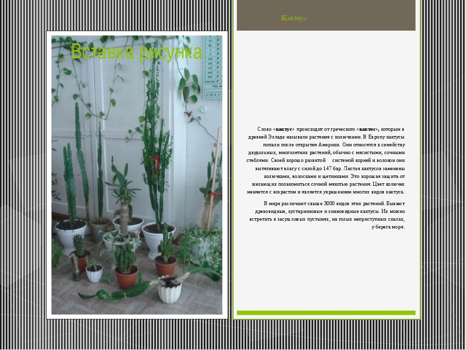 Кактус Слово «кактус» происходитот греческого «кактос», которым в древней Эл...