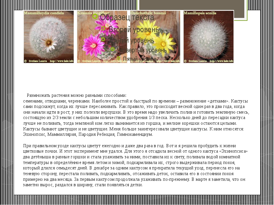 Размножать растенияможно разными способами: семенами,отводками, черенками....