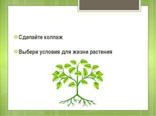 Сделайте коллаж Выбери условия для жизни растения Центр творчества