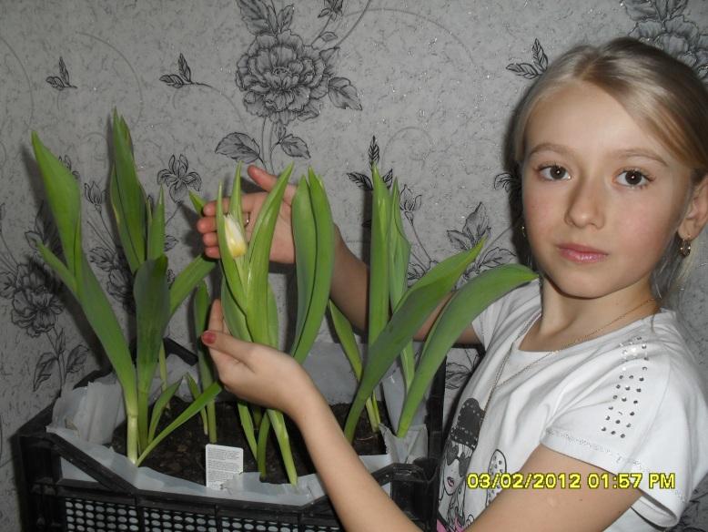 E:\тюльпаны Наташа\SDC14848.JPG