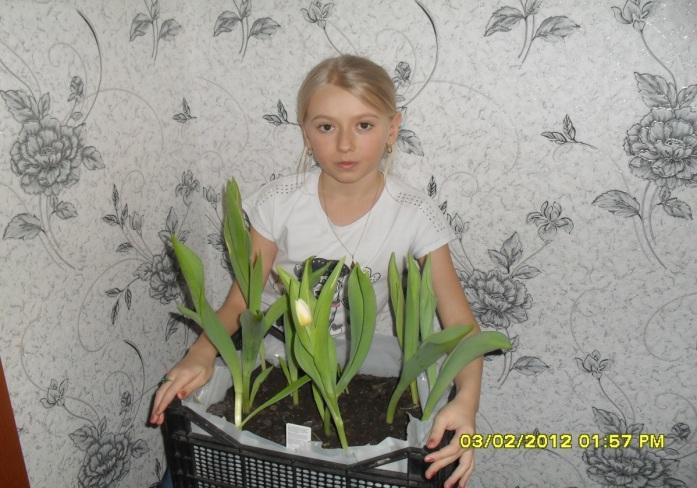E:\тюльпаны Наташа\SDC14849.JPG