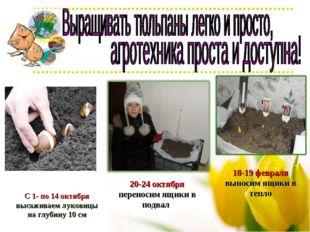 С 1- по 14 октября высаживаем луковицы на глубину 10 см 20-24 октября перенос