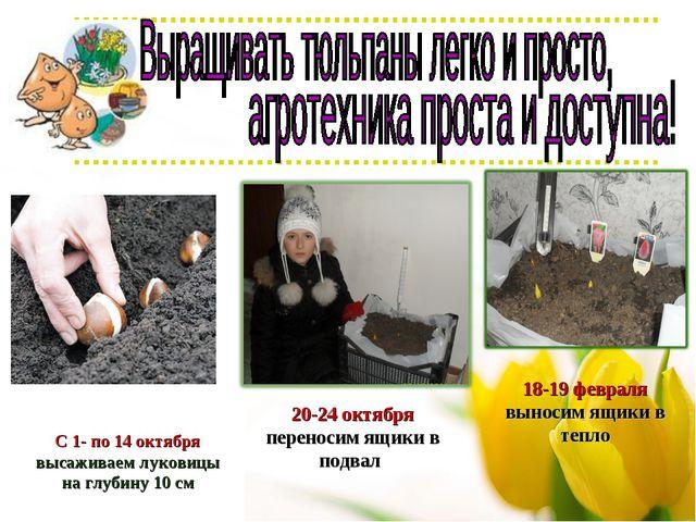 С 1- по 14 октября высаживаем луковицы на глубину 10 см 20-24 октября перенос...